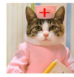 Коту 1 год прививки