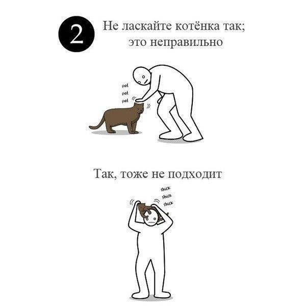 Гладьте своего кота правильно