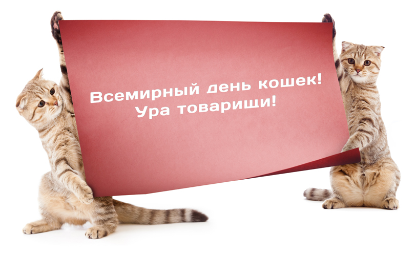 http://cattown.ru/images/post-3-13305528193458.jpg