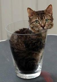 Фото кот в стакане