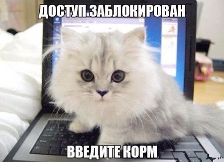 http://cattown.ru/upload/medialibrary/0f7/forbidden.jpg