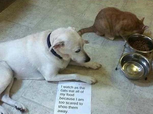 cat shame, dog shaming