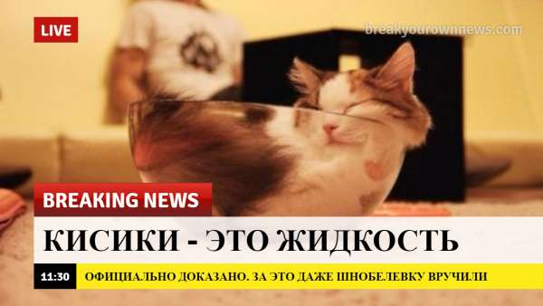breaking news, коты