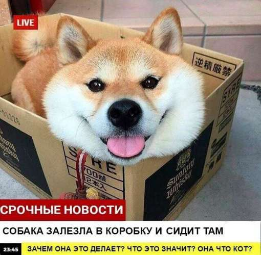 breaking news, собаки