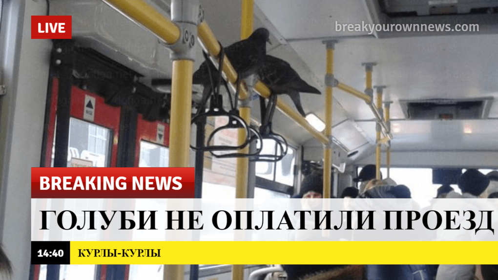 breaking news, голуби