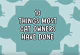 10 Things Most Cat Owners Have Done.png