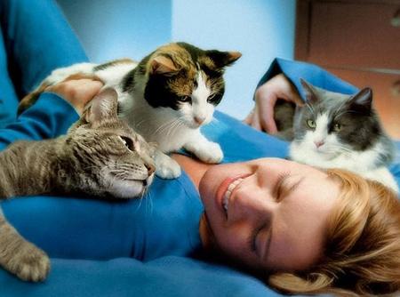 Кошки лечат людей, кошкотерапия