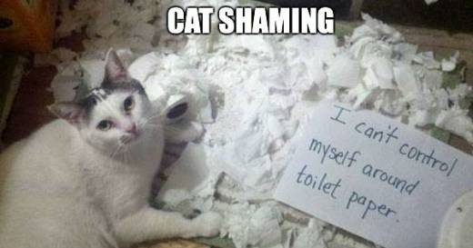 cat shame picture